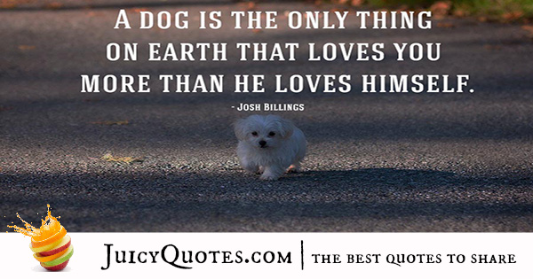 Quotes About Dogs - 17