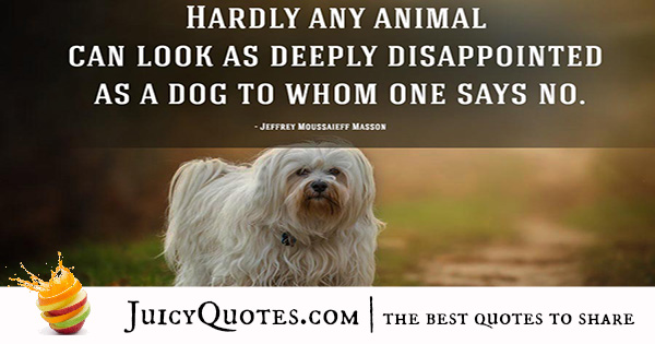 Quotes About Dogs - 19