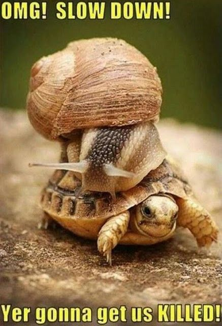 funny-snail-and-turtle