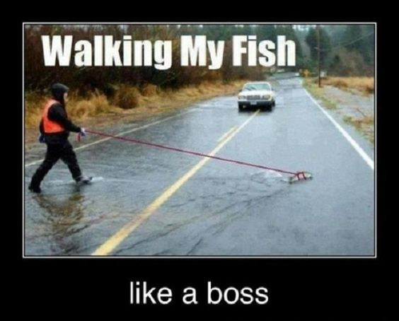 walking-a-fish