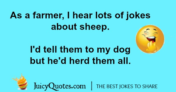silly farmer pun about dogs and sheep