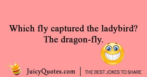 Insect joke about a fly