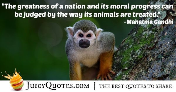 Treating Animals Quote