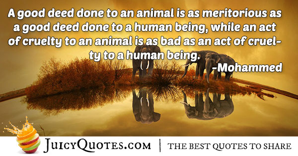 Animal Cruelty Quote