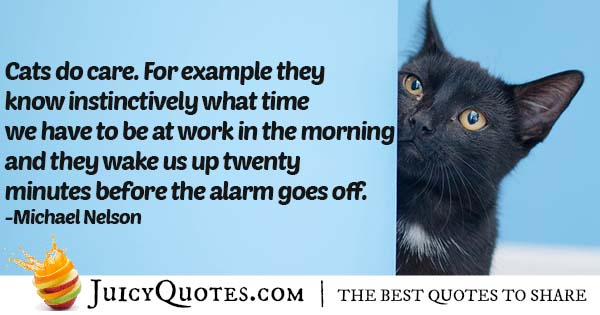 Cats In The Morning Quote