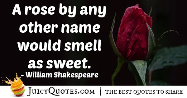 Famous Rose Quote With Picture