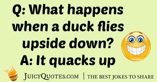 Flying Duck Joke
