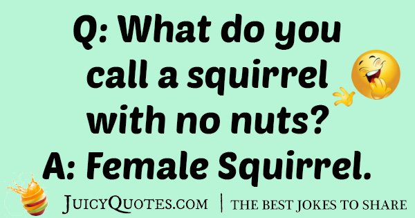 Female Squirrel Joke