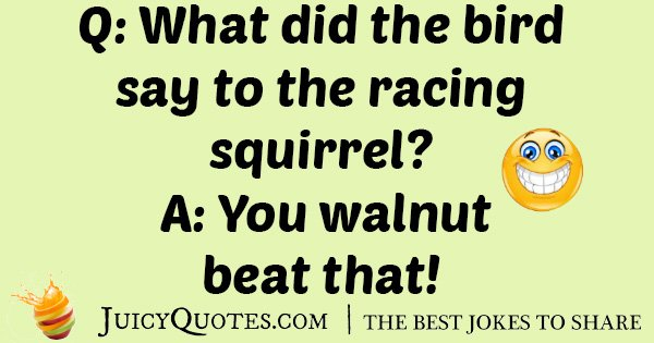 Racing Squirrel Joke
