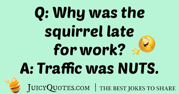Squirrel Traffic Joke