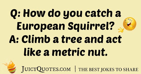 European Squirrel Joke